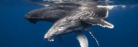 Nage avec les dauphins et les Baleines