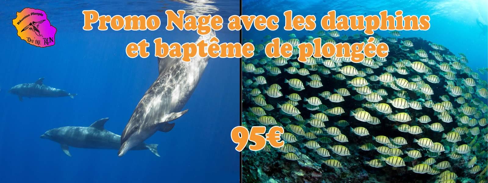 Dauphins Baptême de Plongée Réunion