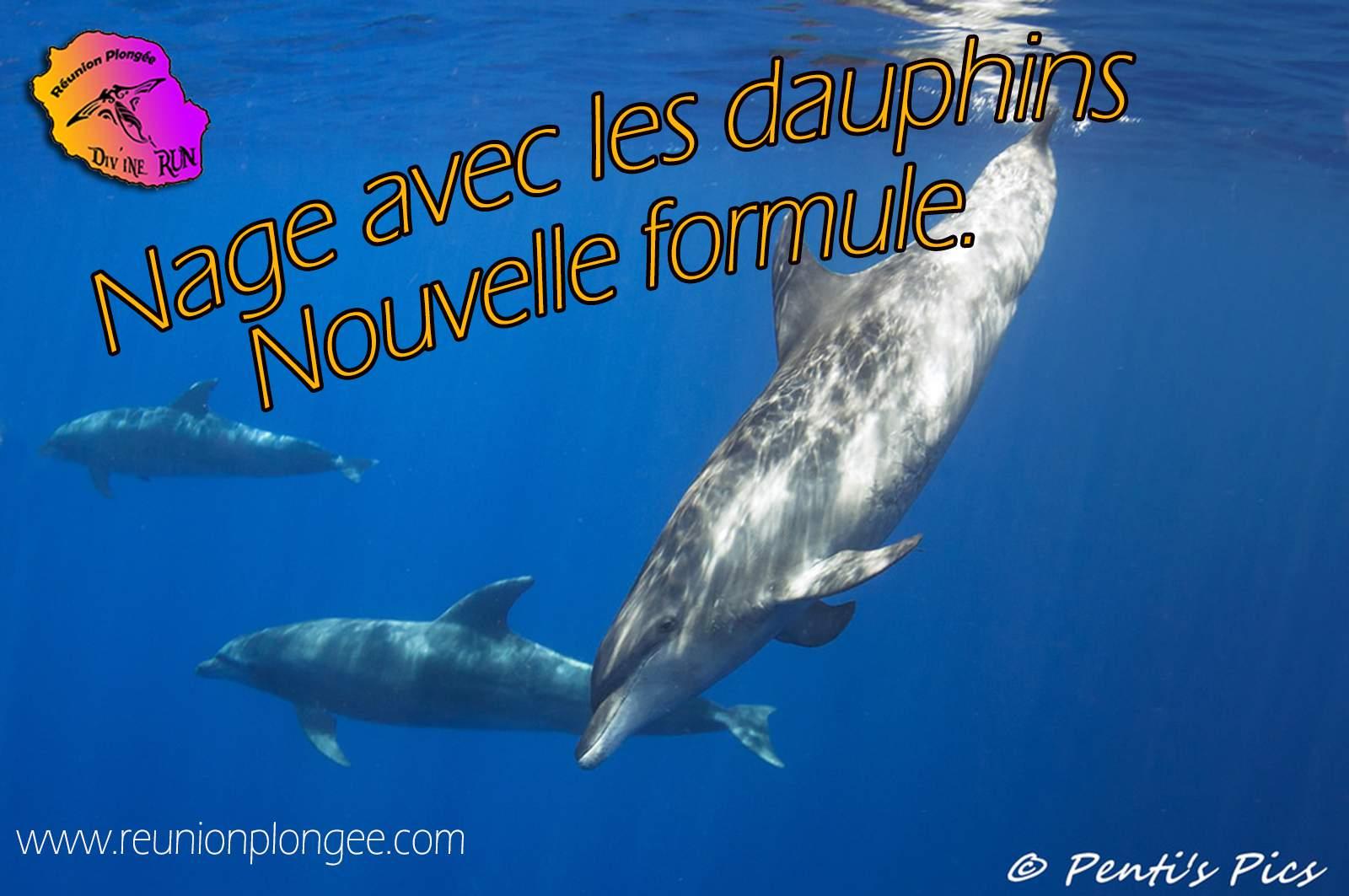 dauphins reunion plongee