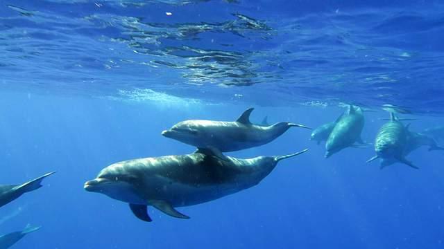 En Février, les dauphins seront au rendez-vous !!!