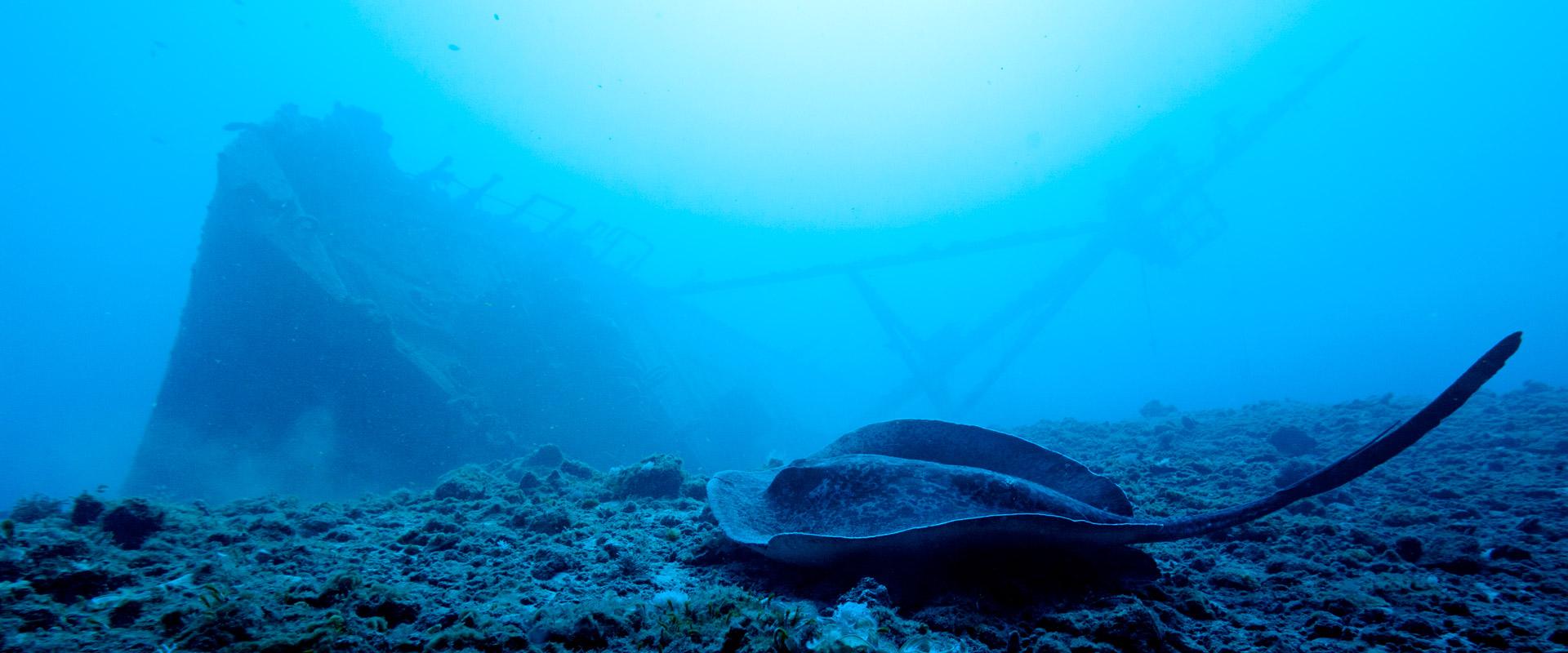 Photo Plongée sous-marine à la Réunion avec Scubananas