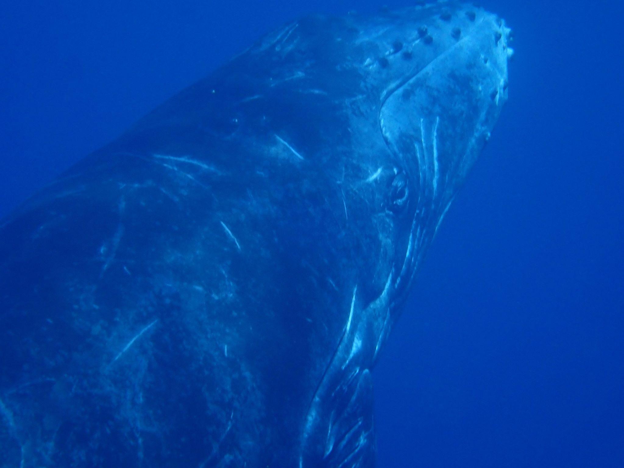 Baleine Réunion