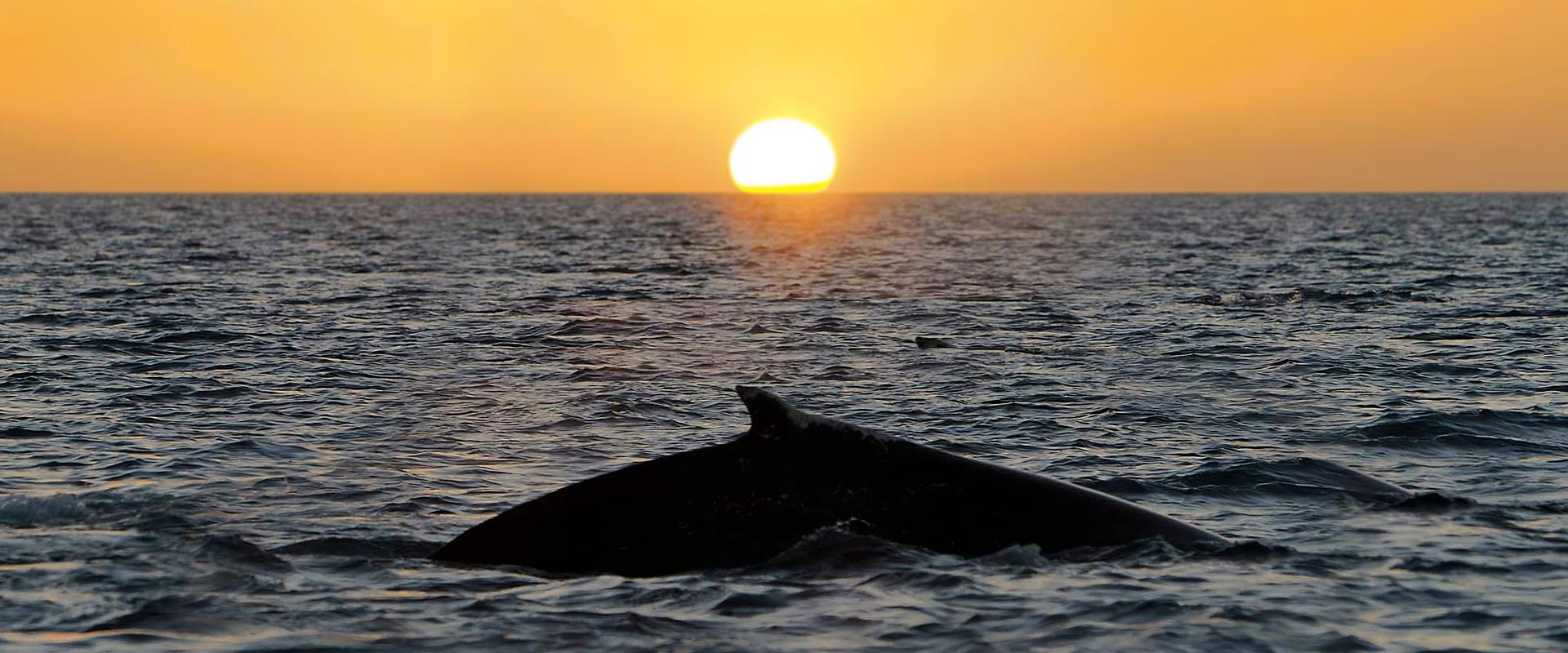 Photo nage avec les dauphins et baleines